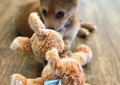 Resident Photo Puppy Jan 19